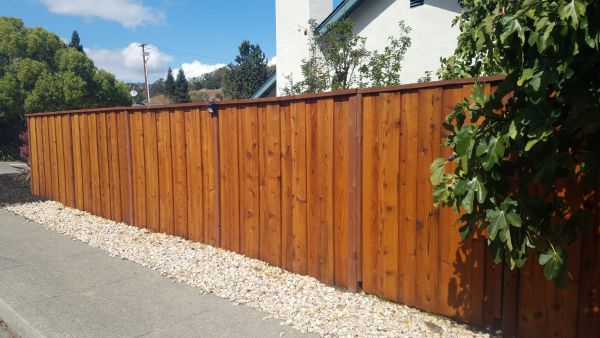 Armstrong Clark Semi Trans Amber on Redwood Fence
